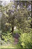 TQ2996 : Footpath next to pond, Lakeside, Enfield by Christine Matthews