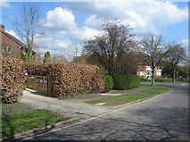 SU6350 : Hedges in Neville Close by Given Up