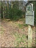 TQ1450 : Footpath in Dorking Wood by Martyn Davies