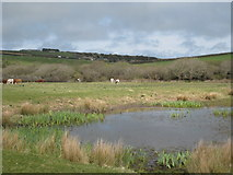 SW7856 : Pond in a field adjacent to Penhale Army Camp by Rod Allday