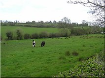H5349 : Ballyscally Townland by Kenneth  Allen