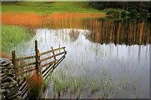 SD3583 : Fence, Bigland Tarn by Mick Garratt