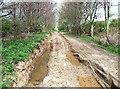 SE9856 : Middle Hill, Eastburn Warren by Paul Glazzard