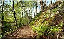 J4681 : Path, Crawfordsburn Glen (3) by Albert Bridge