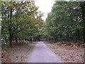 SD3094 : Path through woods by Alex Robinson