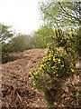 TG0630 : Bracken and gorse by Evelyn Simak