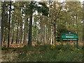 NU0603 : Debdon Forest by wfmillar
