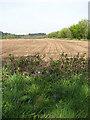 TG0634 : View towards Oakhill Plantation by Evelyn Simak