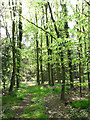 TG0634 : A woodland called Sebastopol by Evelyn Simak