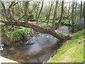 SJ7038 : River Tern downstream of Norton in Hales by John M