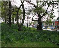 J5081 : Castle Park, Bangor [3] by Rossographer