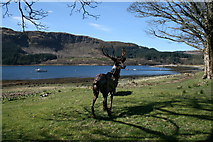 NM6356 : Stag Statue, Rahoy by Peter Bond