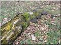 SE7647 : Rotting tree trunk by bernard bradley