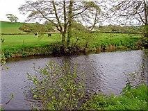 SN0717 : The Eastern Cleddau running past Llawhaden churchyard by Dylan Moore
