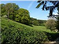 SX3876 : Slopes of Tamar valley, Underhill by Derek Harper