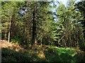 SX3877 : Woodland in the Tamar valley by Derek Harper