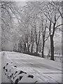 SU9677 : Barry Avenue Windsor by Alan hodgson