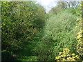 SJ7239 : Overgrown railway cutting by John Poyser