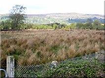 G9412 : Marshy field near Mountallen Bridge by Oliver Dixon