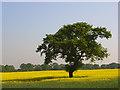 SU8673 : Farmland, Jealott's Hill by Andrew Smith