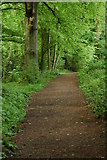 ST5294 : Woodland path to Piercefield Park by Philip Halling