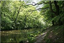 SX4970 : Buckland Monachorum: river Walkham 1 by Martin Bodman