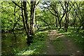 SX4970 : Buckland Monachorum: footpath beside the Walkham by Martin Bodman