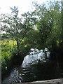 SO8480 : River Stour upstream of Cookley Bridge by John M