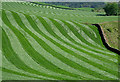 NY3488 : A rolled field at Douglen Brae by Walter Baxter
