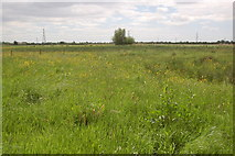 ST4286 : Magor Marsh by Roger Davies