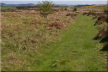 NT9937 : Path & Moorland by John Whelan