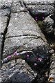 NM2161 : Rocks and sea-pink by Bob Jones
