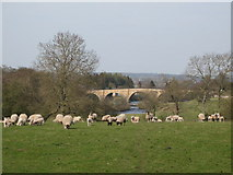 """NY9170 : """"Busy"""" pastures west of Chollerford Bridge by Mike Quinn"""
