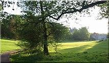SX8963 : Cockington: the park by Derek Harper
