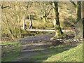 SN8786 : River Severn,Wooden footbridge,Rhyd-yr-Onnen by kevin skidmore