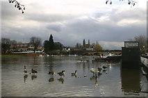 SU7682 : A high River Thames by Shaun Ferguson