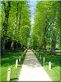 TQ1352 : Tree-lined walk Polesden Lacey by Peter Holmes