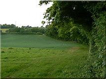 SU6349 : Three Shades of Green by Sandy B