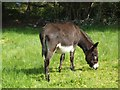 G7632 : Irish Donkey by Kenneth  Allen