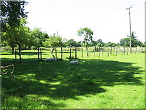 SO8149 : Sheep relaxing at Deblin's Green by Peter Whatley