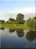 TL4279 : Reflections in the Hundred Foot Drain by Alison Rawson