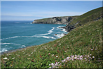 SX0486 : Tintagel: towards Penhalic Point by Martin Bodman