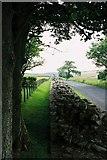 NY6166 : Hadrian's Wall near Birdoswald Roman Fort by Andrew Barclay