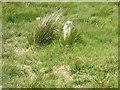 SD7115 : Standing Stone, Cheetham Close by liz dawson