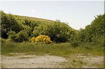 SW9756 : Lane at Whitemoor by Rabbi WP Thinrod