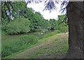 SP3165 : River Leam by Dennis Turner