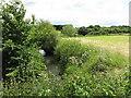 SO8661 : River Salwarpe in summer by Peter Whatley