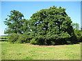 SO9054 : Trees near Bredicot by Philip Halling