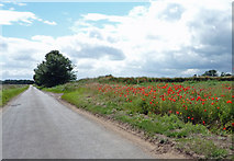 SE8922 : The Road to Alkborough by David Wright