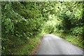 SO0053 : Through the woods by Bill Nicholls